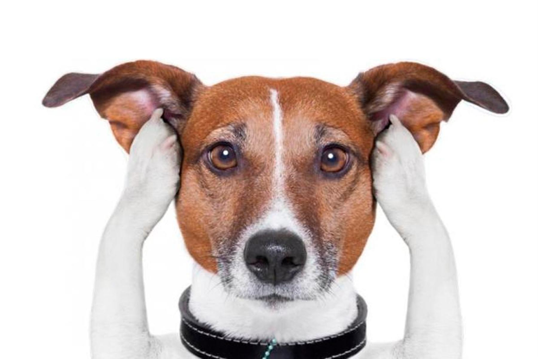 Hay que adoptar medidas para proteger a nuestras mascotas del ruido de los pirotécnicos. Foto: ANDINA/Difusión