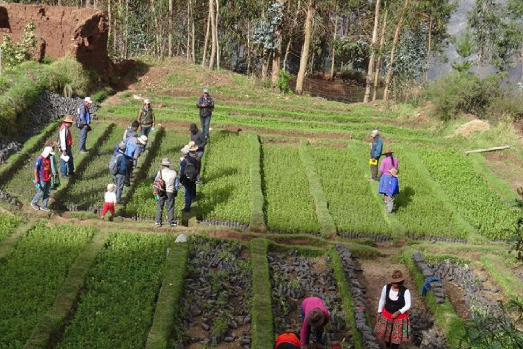 La agricultura fue uno de los sectores más beneficiados con la inversión realizada en Apurímac. ANDINA/Difusión