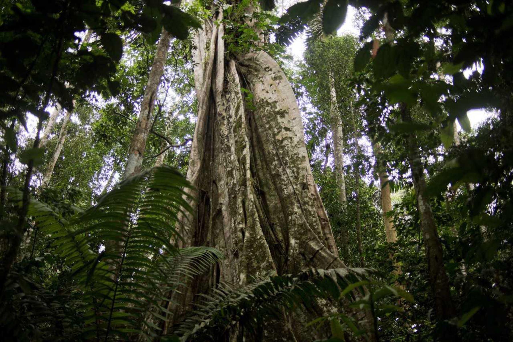 Uno de los grandes avances de este año, fue la zonificación de 22.2 millones de hectáreas de bosques correspondiente a San Martín, Loreto y Ucayali, proceso que tuvo la asistencia técnica y el asesoramiento del Servicio Nacional Forestal y de Fauna Silvestre (Serfor)