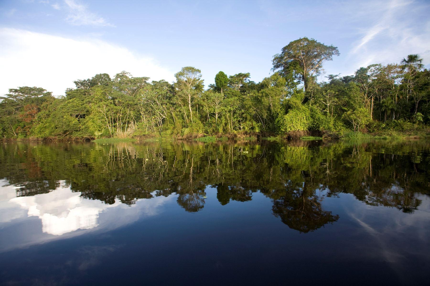 El Perú ocupa el cuarto lugar en el planeta entre los países con mayor extensión en bosques tropicales y el segundo en bosques amazónicos. Al celebrarse hoy el Día Internacional de los Bosques Tropicales, repasemos cuáles los principales tipos de bosque existentes en el país. ANDINA/Difusión