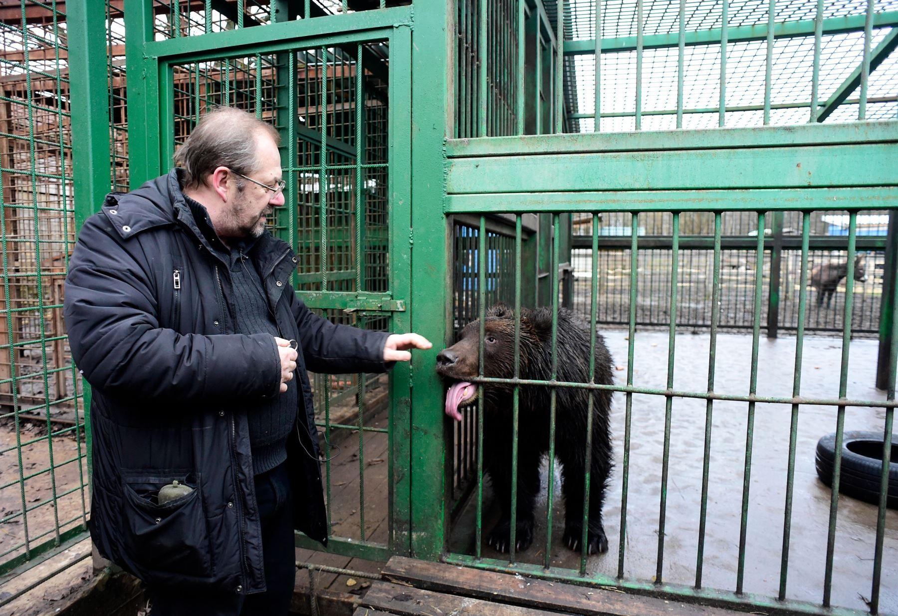 Alexander Fedorov, propietario y fundador de Veles, un refugio para animales salvajes, visita un oso en la aldea de Rappolovo, en las afueras de San Petersburgo Foto: AFP