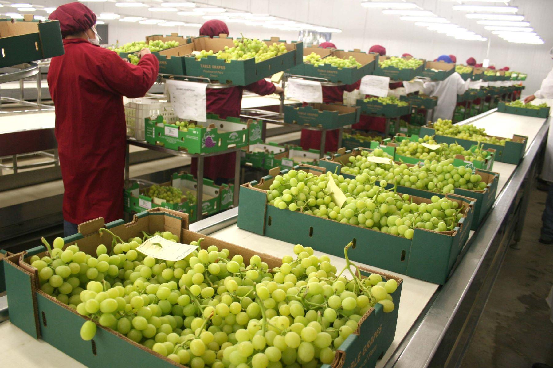 Agroexportaciones de Lambayeque crecen en 26 % en periodo enero-abril. ANDINA/Difusión