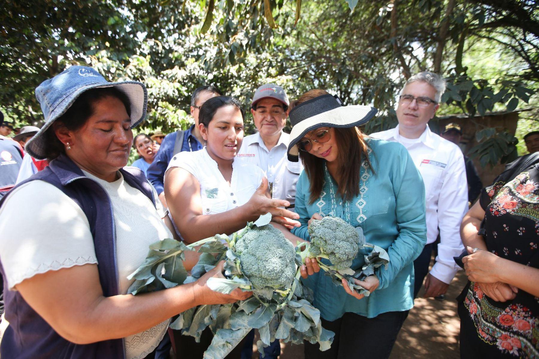 Producción de hortalizas mejora la economía familiar en región Ayacucho. ANDINA/Difusión