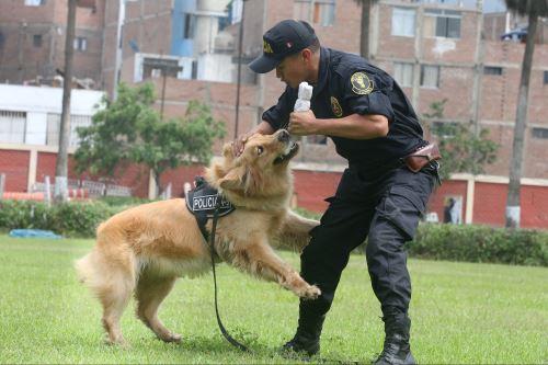 Policía Canina: ojos y olfato al servicio de la seguridad