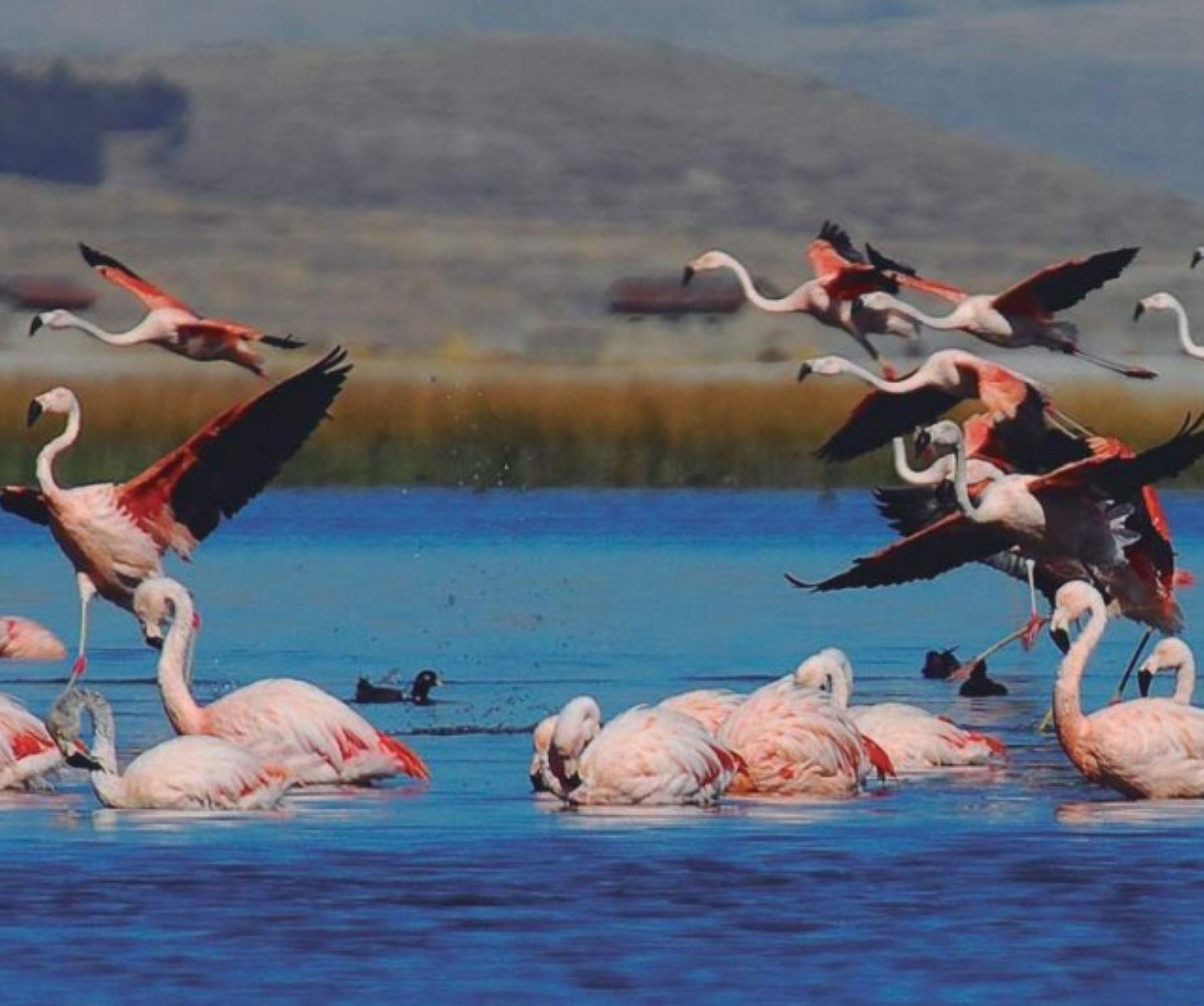 El próximo 2 de febrero se celebrará el Día Mundial de los Humedales. En esta efeméride se conmemora la elaboración de la Convención sobre Conservación de Humedales y Aves Acuáticas, conocida también como la Convención de Ramsar, la cual busca preservar aquellos humedales que son de suma importancia a escala mundial.