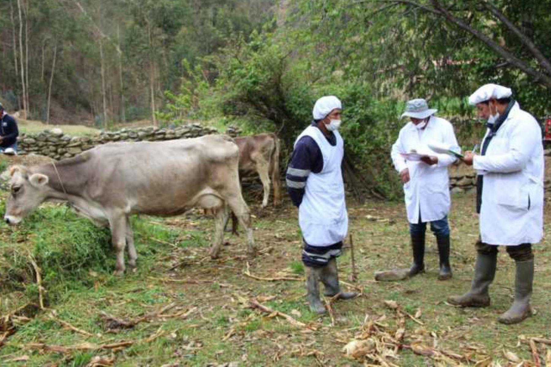 Agro Rural y proyecto Nueva Zelanda unifican estrategias a favor de productores lecheros peruanos