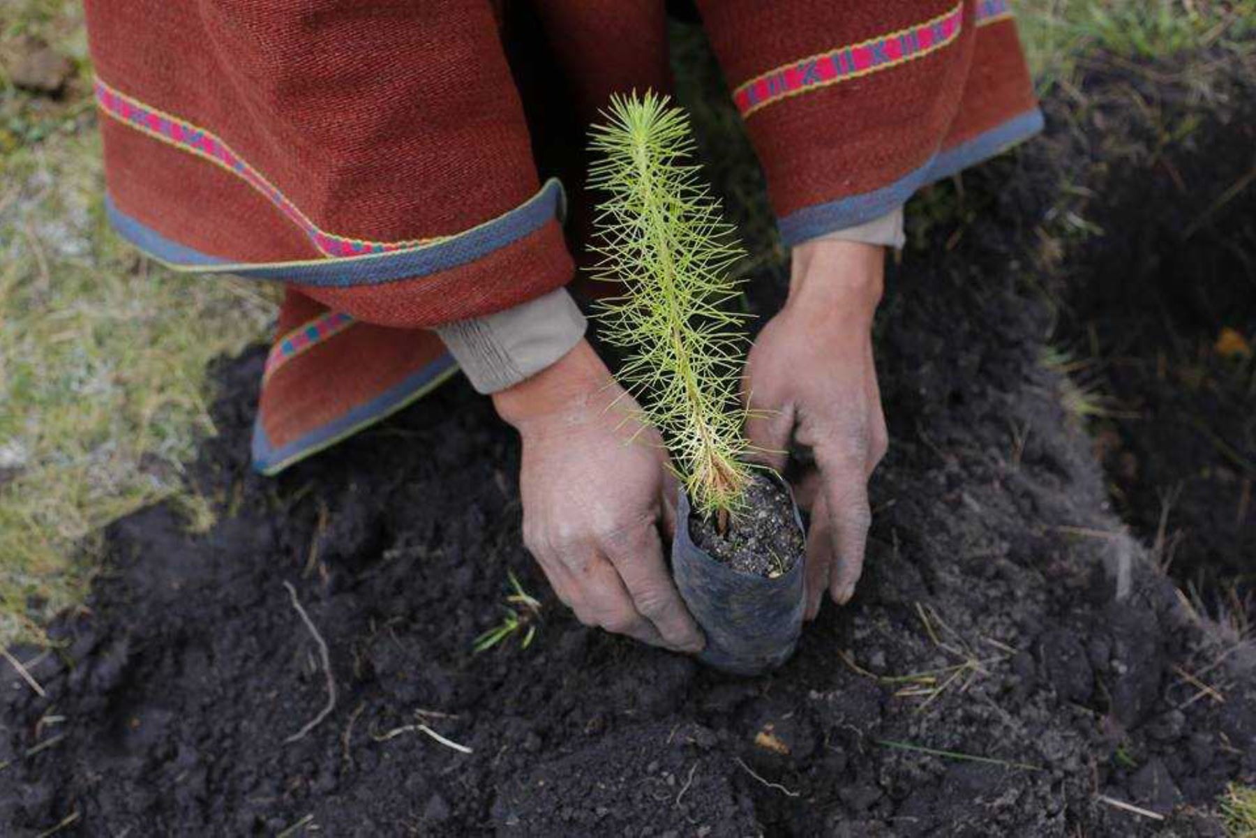 Gobierno Regional de Lima invertirá S/ 25 millones para ejecutar proyectos de reforestación en la sierra de Lima. ANDINA/Archivo