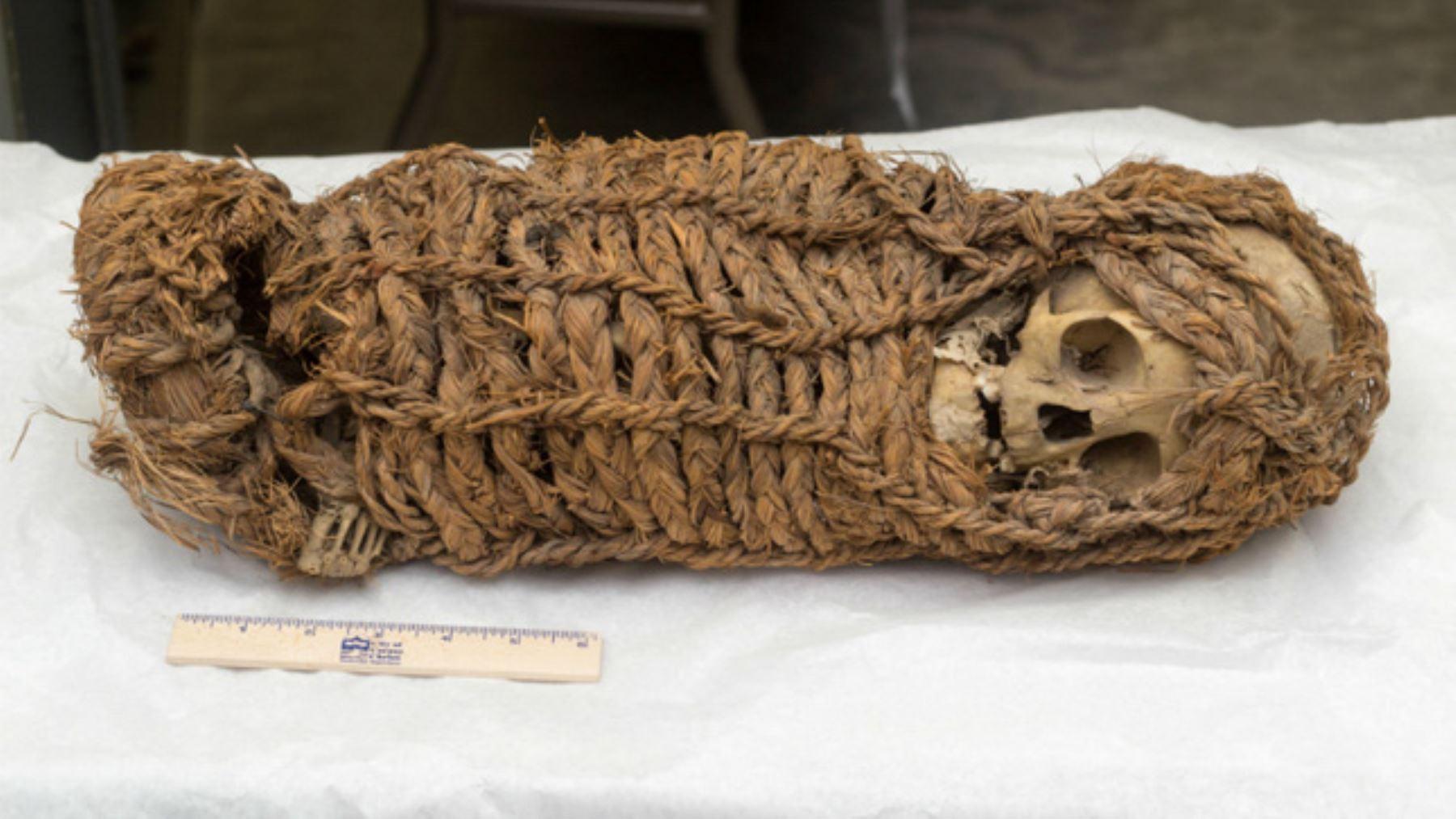 La momia de origen aimara, devuelta al Perú por el Museo de Ciencia e Historia de Corpus Christi y que llega hoy a nuestro país corresponde, según los estudios, a un infante de dos a cuatro años de edad, de sexo por definir, que vivió en la época inca (siglos XV-XVI).