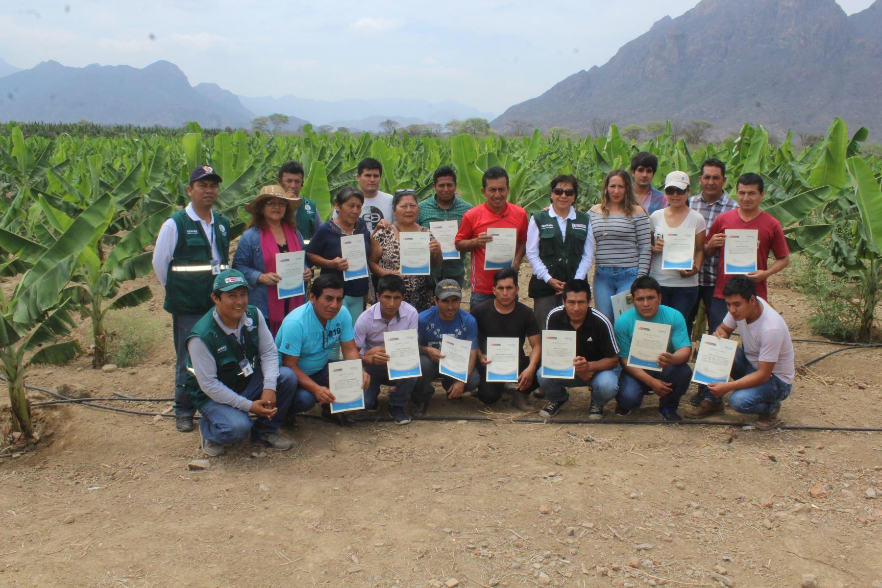 Diecisiete productores bananeros de Olmos (Lambayeque) ahora son expertos en el manejo integrado de plagas.
