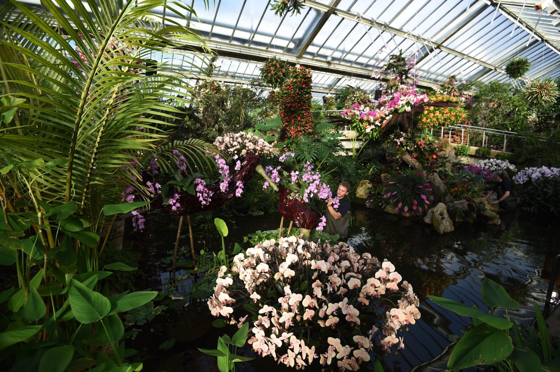 """Una encargada se ocupa de los preparativos finales para el """"Festival de la Orquídea: Celebrando el color de Colombia"""" en el Real Jardín Botánico de Kew, al oeste de Londres (Reino Unido) Foto: EFE"""