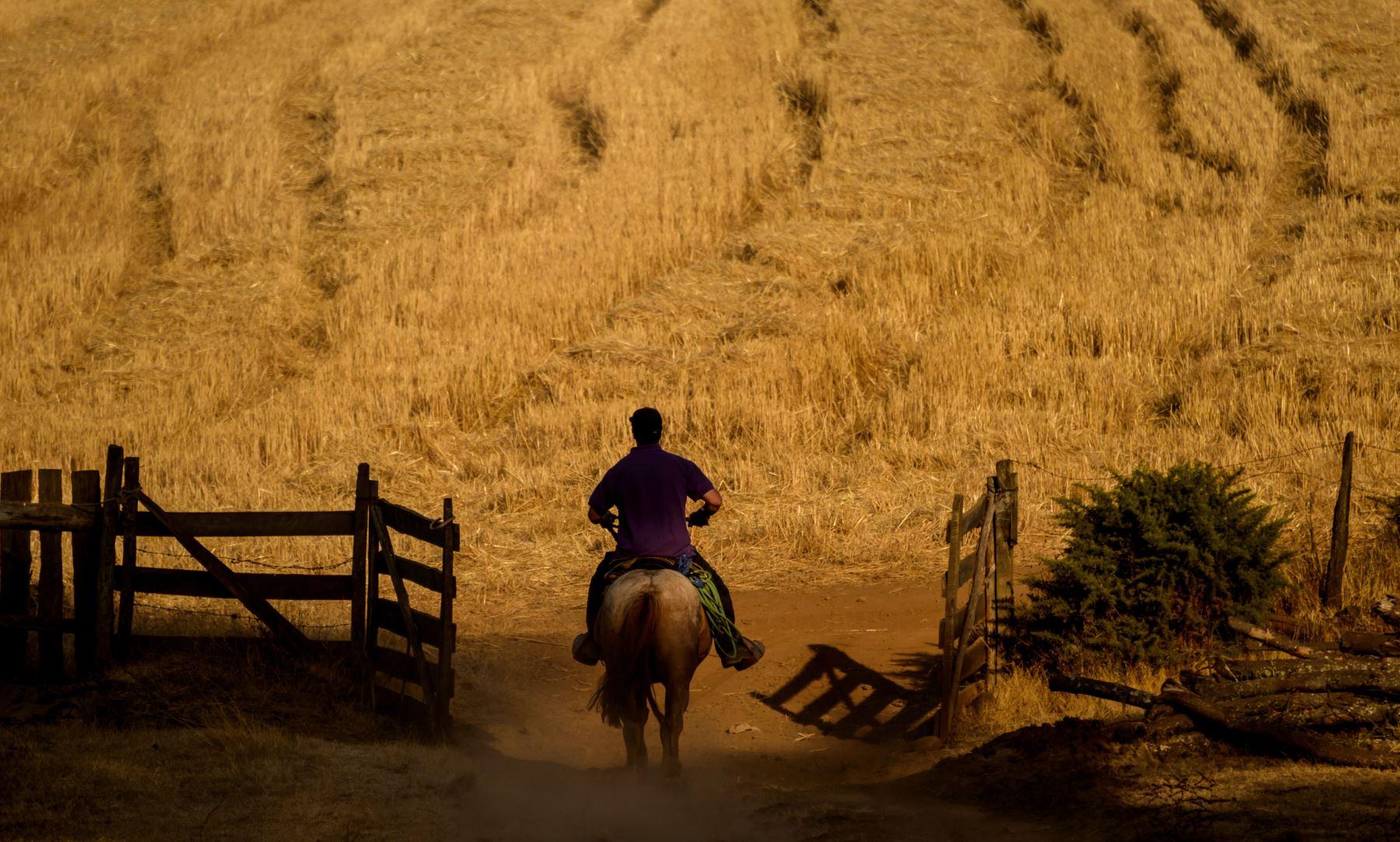 Un hombre monta un caballo alrededor de Galvarino en la región de Araucania, en el centro de Chile, cerca de un área afectada por un incendio forestal. Las autoridades declararon alerta roja en la región de Araucania ya que los incendios forestales mataron a dos personas, hirieron a otras dos y quemaron más Que mil hectáreas hasta ahora. AFP