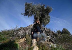 """Sira Plana, cofundadora de """"Adopta un olivo"""", posa junto a una en Oliete Foto: AFP"""