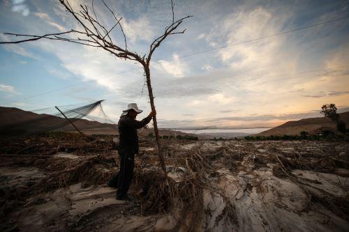 Tacna, una región en emergencia agrícola
