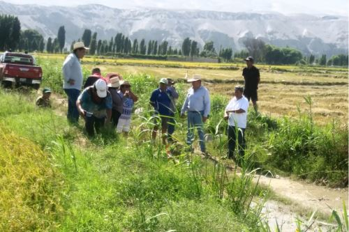 Arequipa: crece caudal de los ríos Majes  y Chili, que  arrasan cultivos de arroz