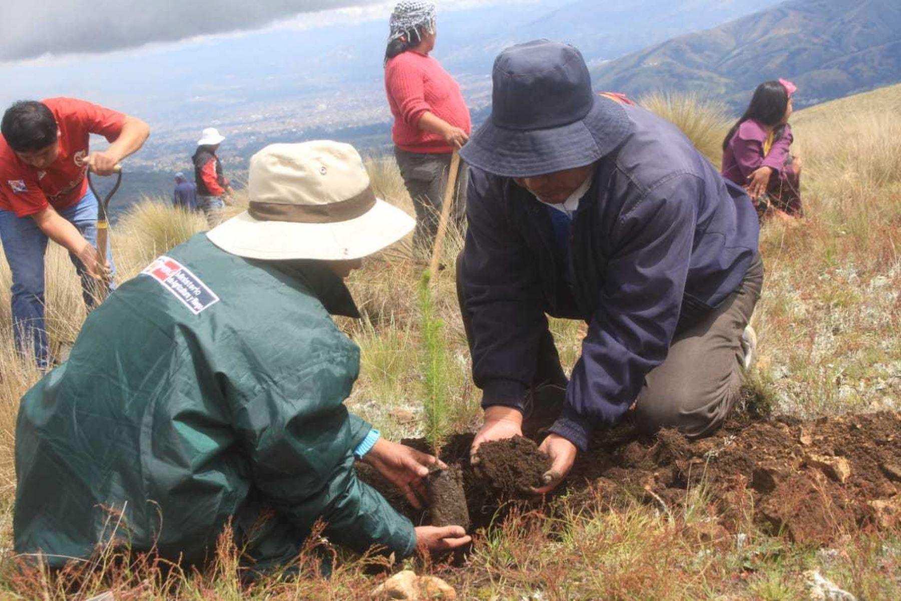 """Más de 500 campesinos hombres y mujeres del distrito de Pucará en la provincia de Huancayo, participaron activamente en el lanzamiento de la """"Campaña Forestal en la Región Junin"""", impulsada por el Ministerio de Agricultura y Riego (Minagri) y ejecutada a través de Agro Rural en alianza estratégica con los gobiernos regionales y locales."""