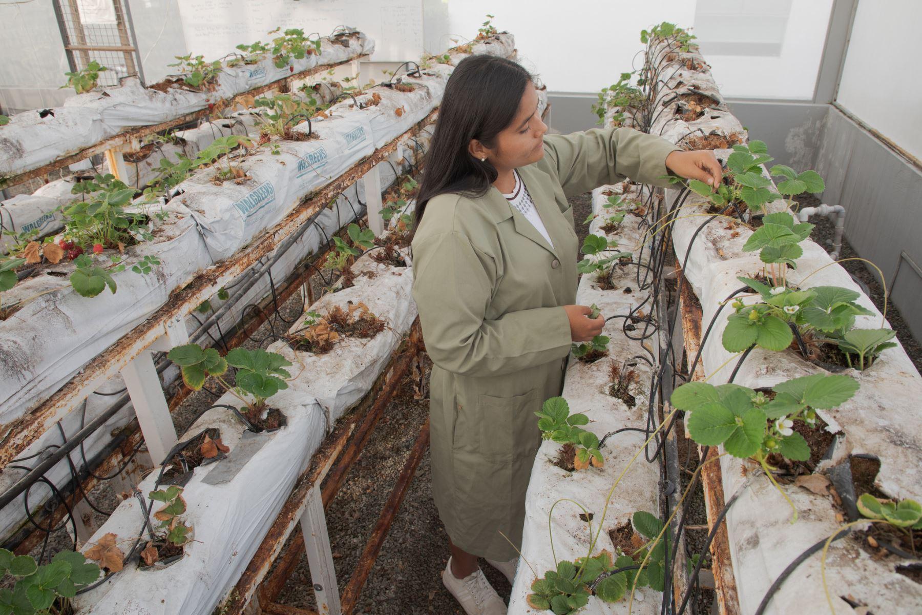Las becas están relacionadas con la agricultura, alimentación, medio ambiente y ciencias de la salud. Foto: Pronabec