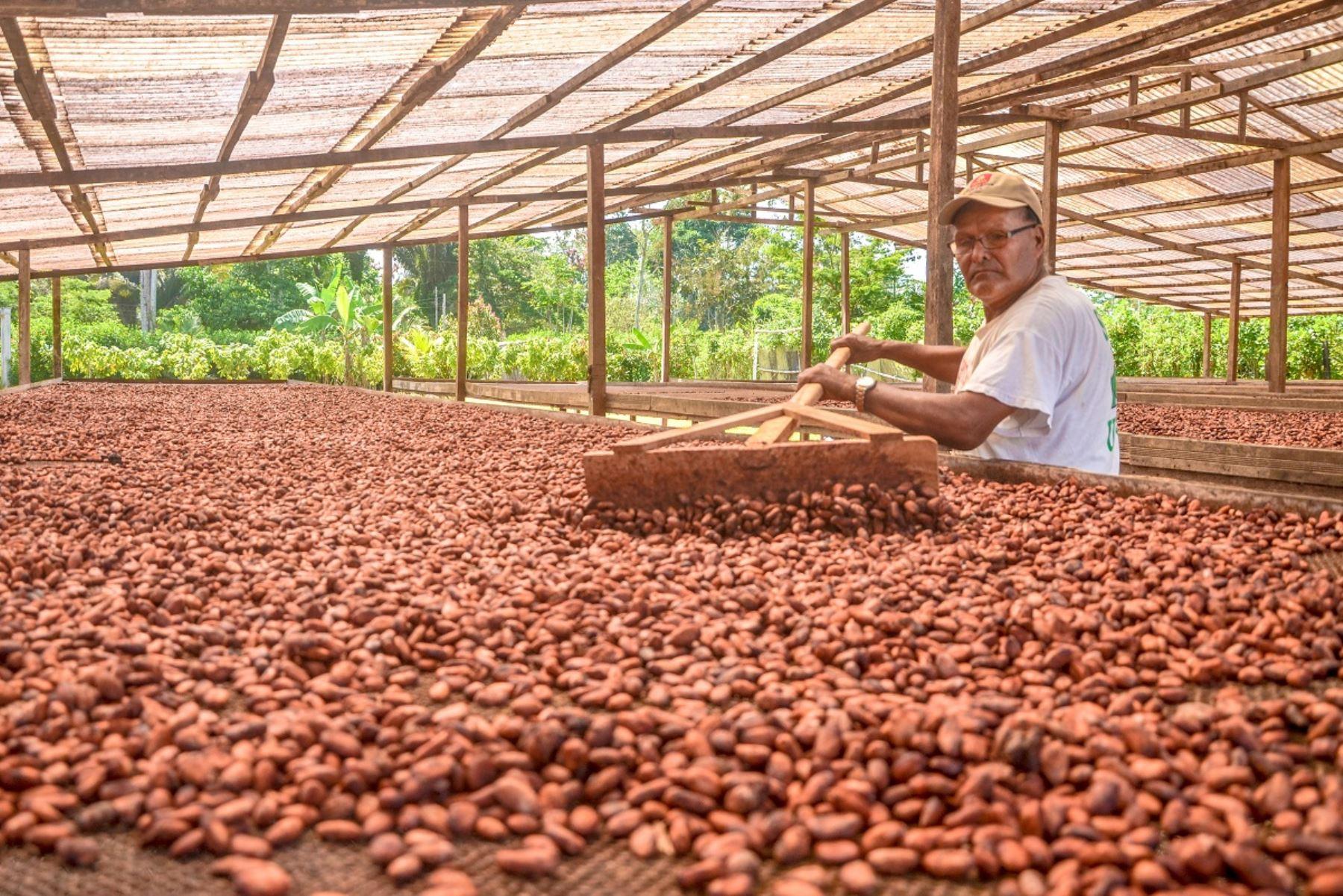 Cacao del Alto Huallaga de Huánuco. Foto: Cortesía.