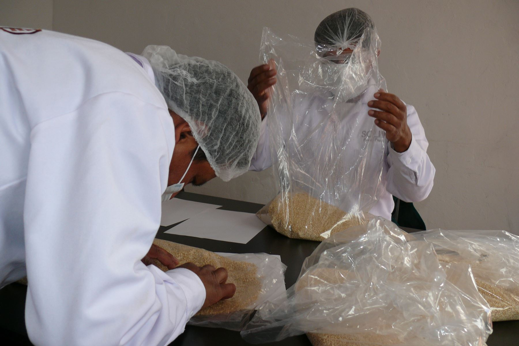 Senasa certifica nuevo cargamento de quinua ayacuchana para el mercado europeo. ANDINA/Difusión