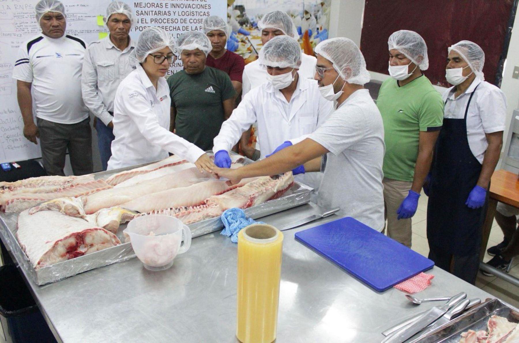 Pescadores de la Reserva Nacional Pacaya Samiria, región Loreto, fueron capacitados en procesamiento primario del paiche para consumo humano.