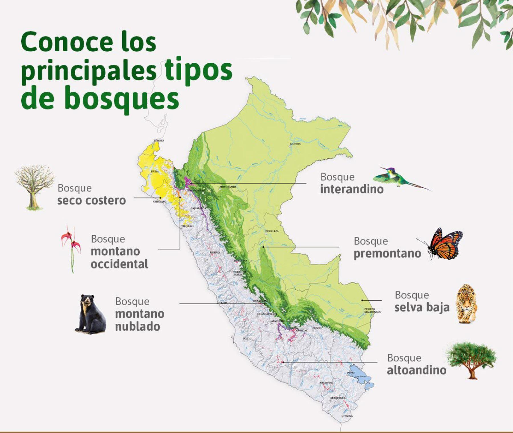 Dia Mundial De Los Bosques Conoce Los Principales Tipos De Bosque En Peru Noticias Agencia Peruana De Noticias Andina