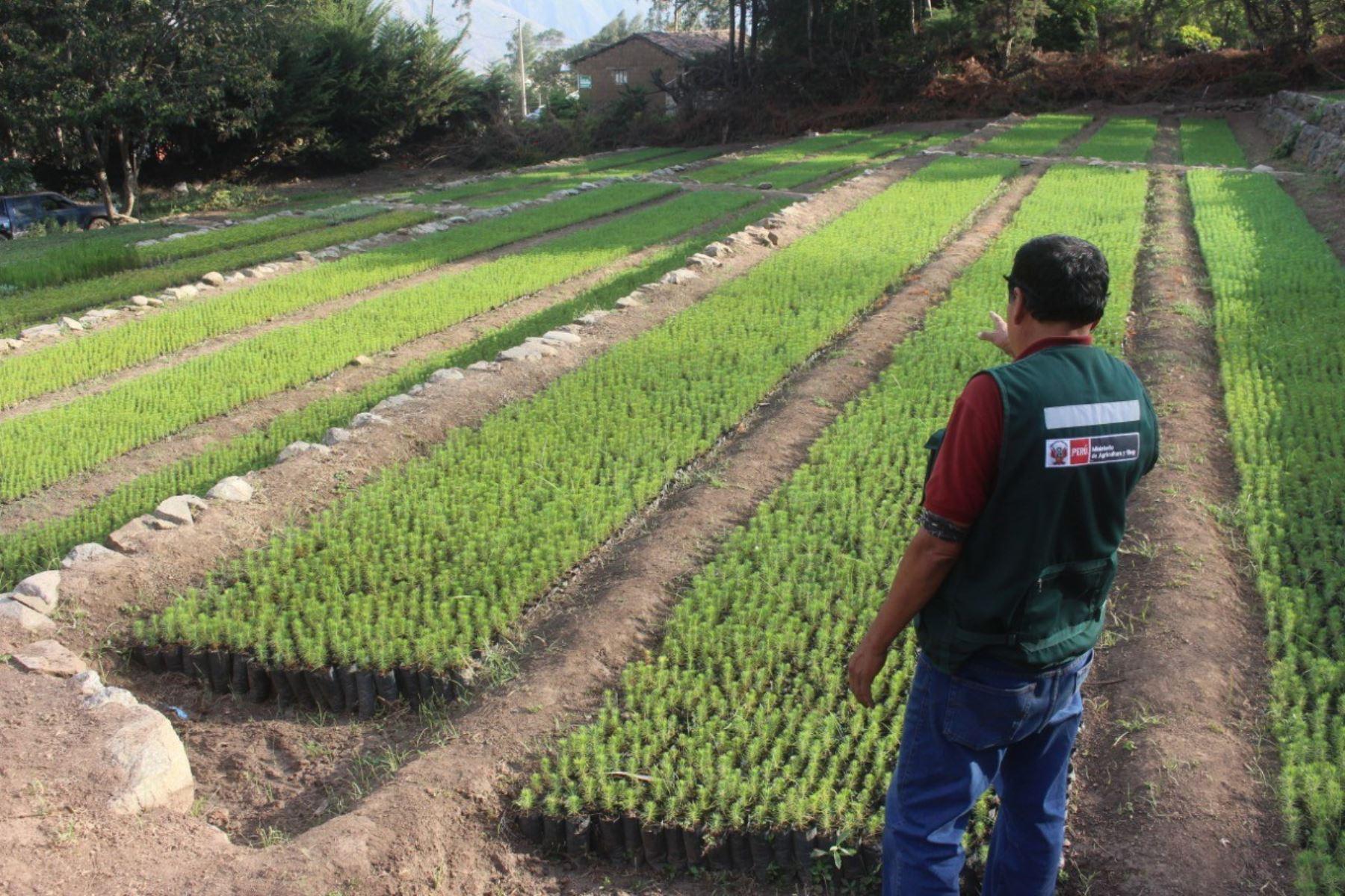Minagri firma convenio con municipio y comunidades campesinas para sembrar 200,000 árboles en Lambayeque hasta el año 2022
