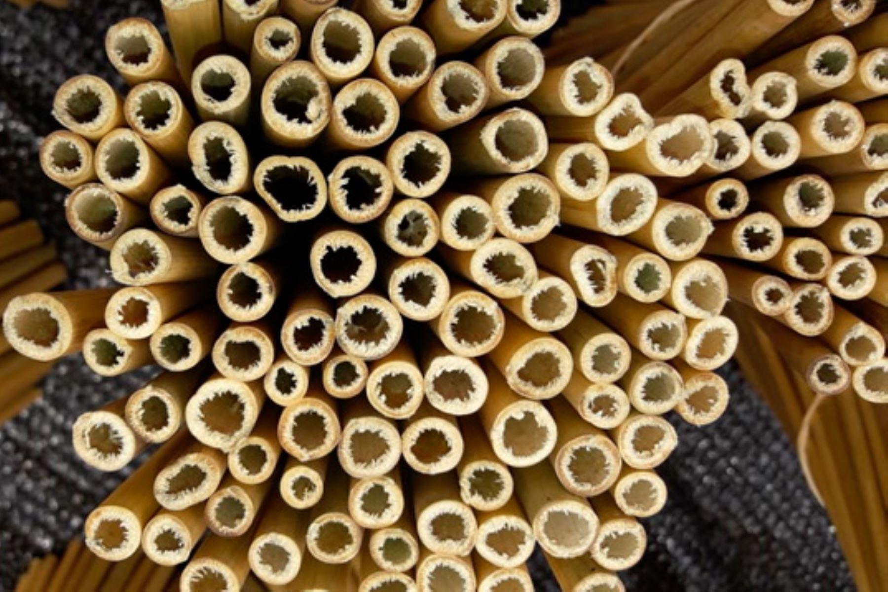 Agricultores de Monzón, en Huánuco, innovan con la elaboración de cañitas biodegradables de bambú. ANDINA/Difusión
