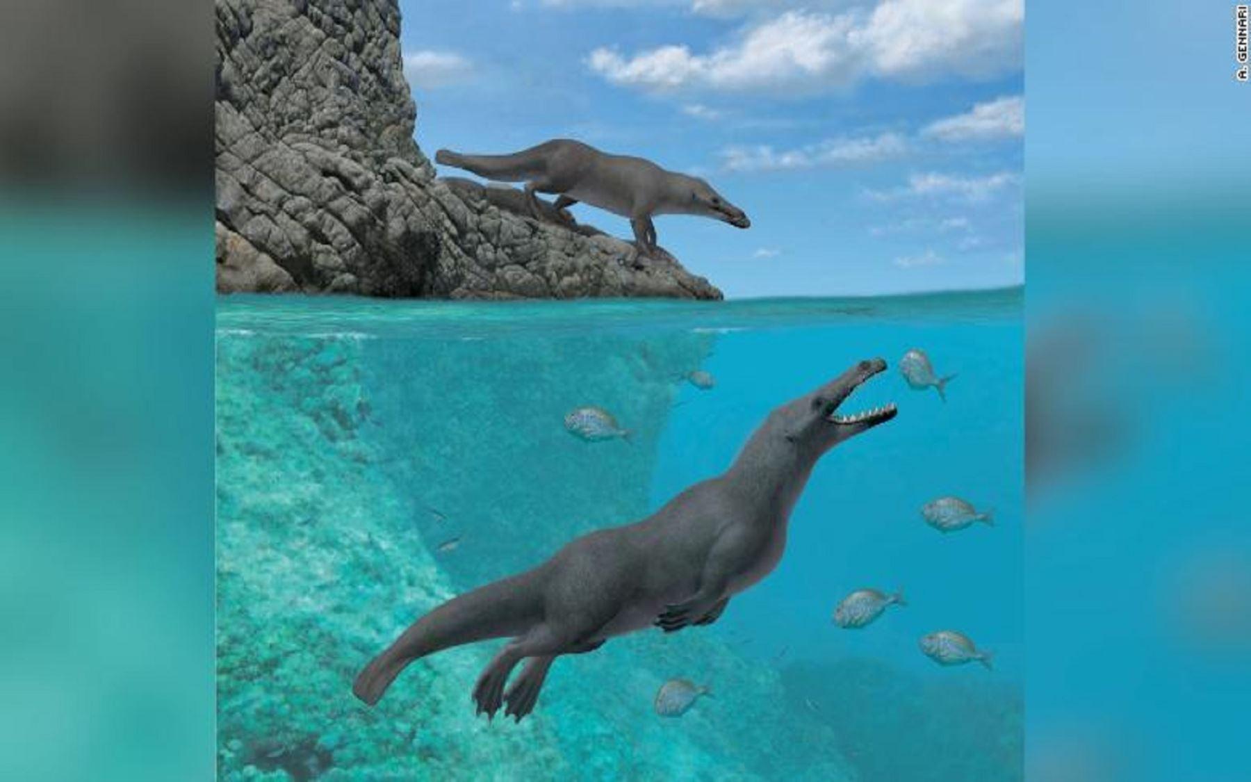 Hallan restos de una ballena con cuatro patas similar a una nutria en Perú Foto: CNN
