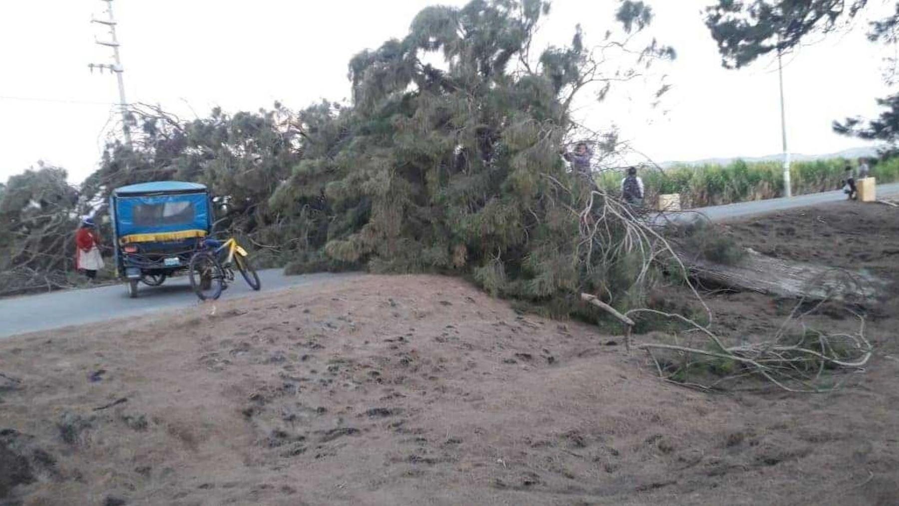 Los fuertes vientos que se vienen presentado en la región Áncash, provocaron la caída de un pesado árbol en el distrito de Samanco, provincia del Santa, informaron las autoridades locales.