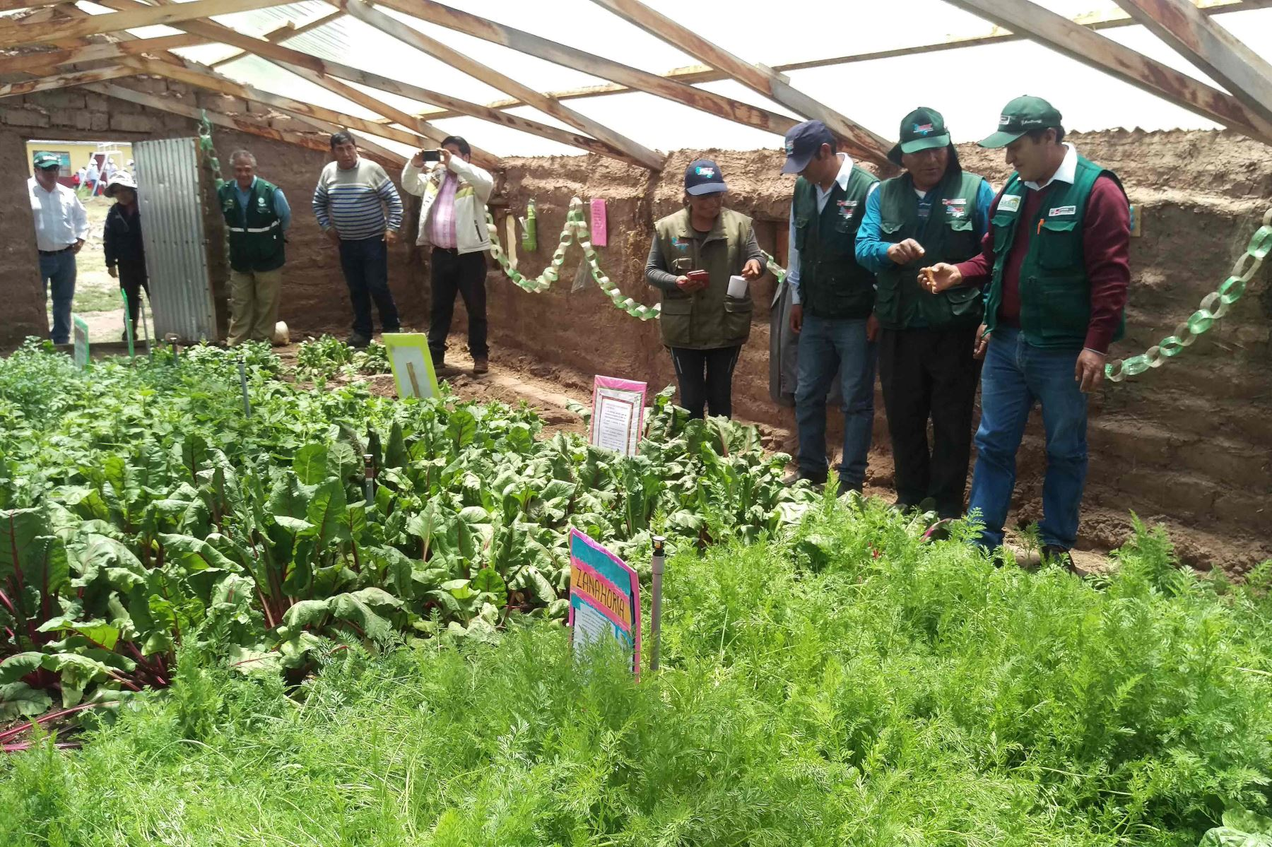 Emplearán tecnología para cultivar hortalizas y frutas en zonas afectadas por heladas. ANDINA/Difusión