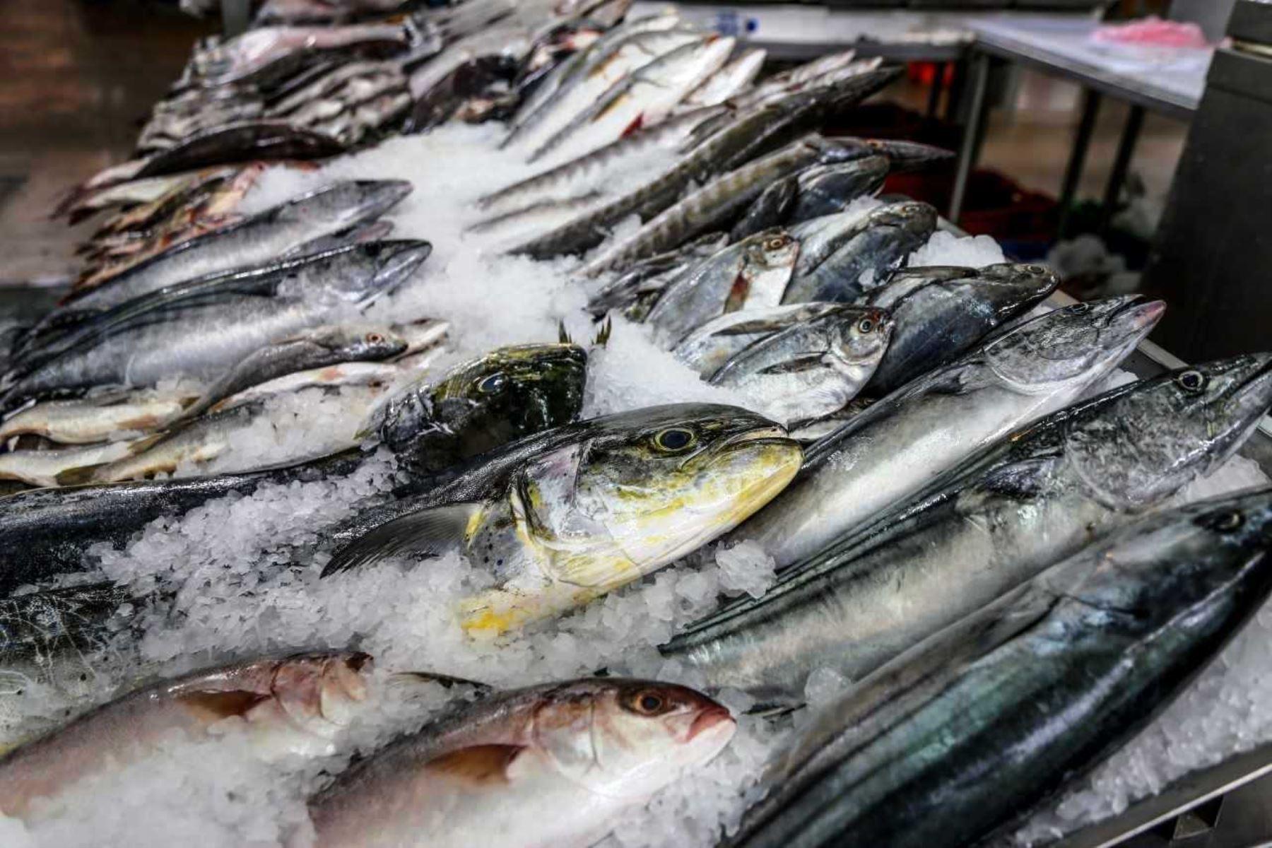 Semana Santa: sepa cómo seleccionar pescado fresco y sano. Foto: ANDINA/difusión.
