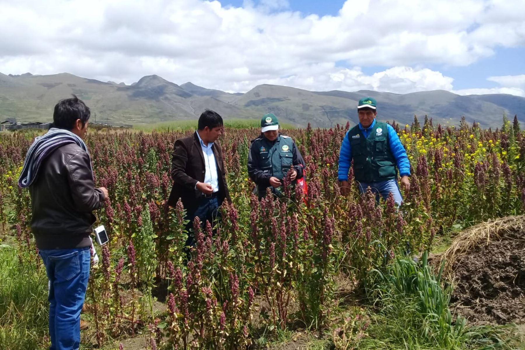 Brigadas del Ministerio de Agricultura evalúan el impacto de las heladas en el sector agropecuario de Apurímac. ANDINA/Difusión