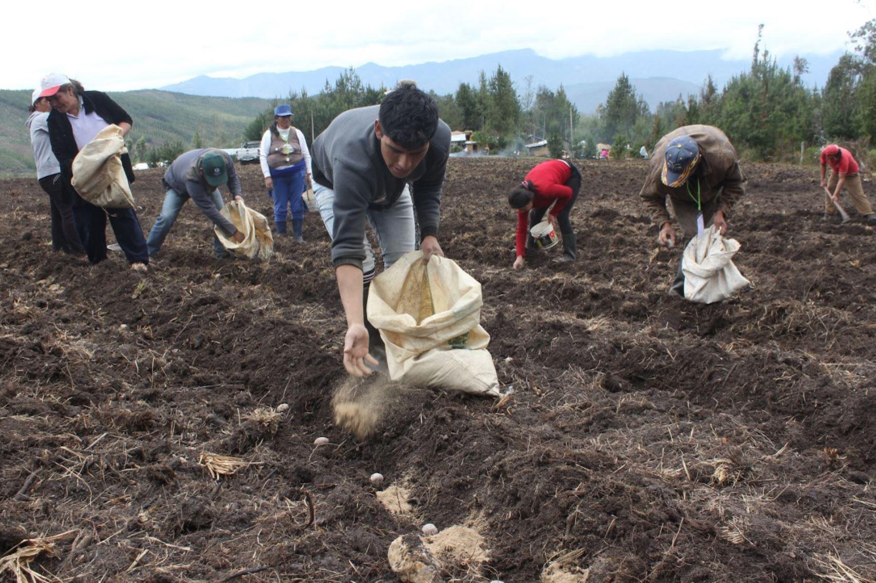 Minagri promueve uso de guano de isla en productores asociados de Piura