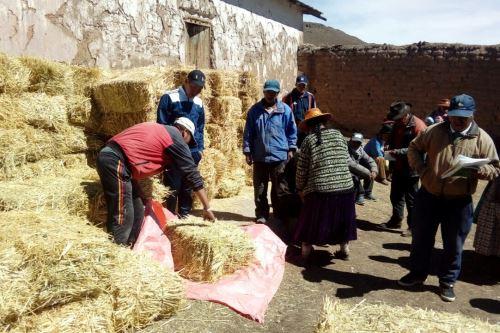 Representantes de Agro Rural del recomendaron el corte, secado y almacenamiento de pastos cultivados como la avena forrajera, alfalfa, cebada, triticale (cruce de trigo y centeno) para su conservación como heno.