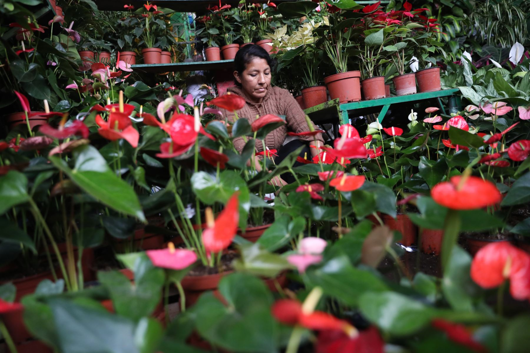 Compra de arreglos florales tienen gran demanda en el día de la madre.  Foto: ANDINA/Melina Mejía