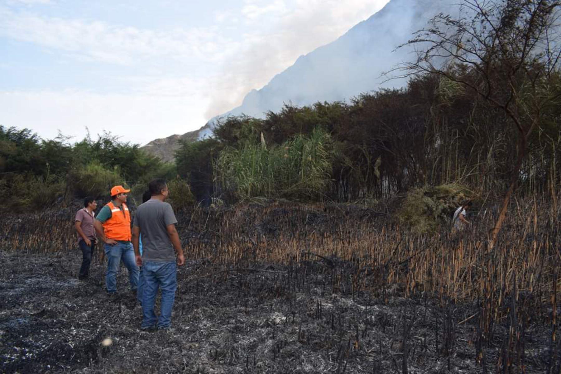 Un incendio forestal de regular magnitud arrasó 10 hectáreas de carrizales y hierbas en el sector de Tucushuanca,en la provincia ancashina de Casma.