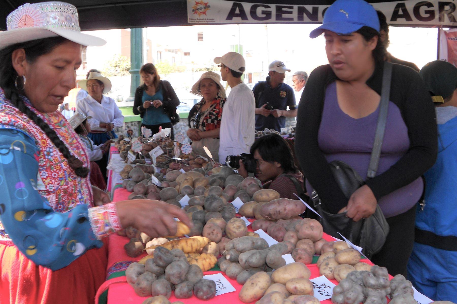 Arequipa trabaja para incrementar hectáreas de cultivos de papa.