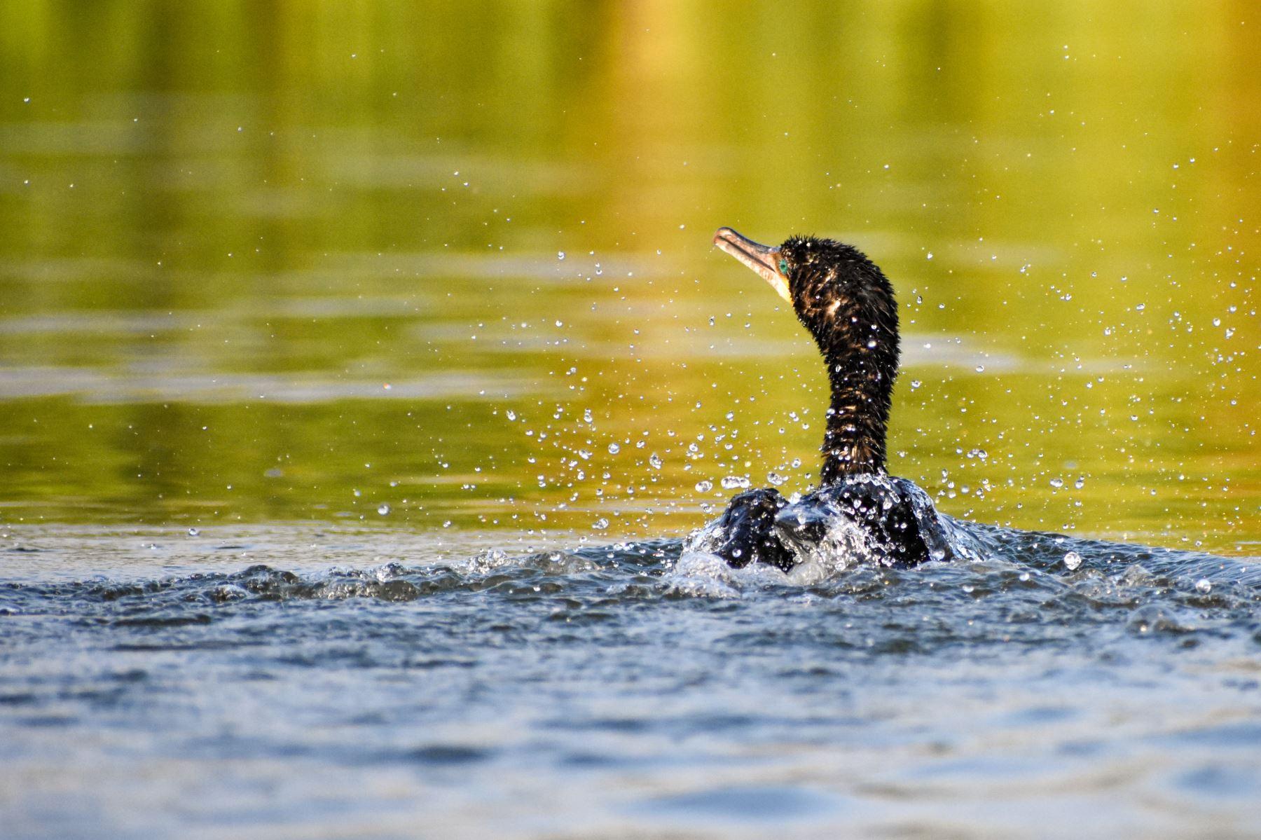 Estudiantes podrán aprender sobre ecoturismo y cuidado del medio ambiente en Pantanos de Villa. Foto: Andina/Difusión