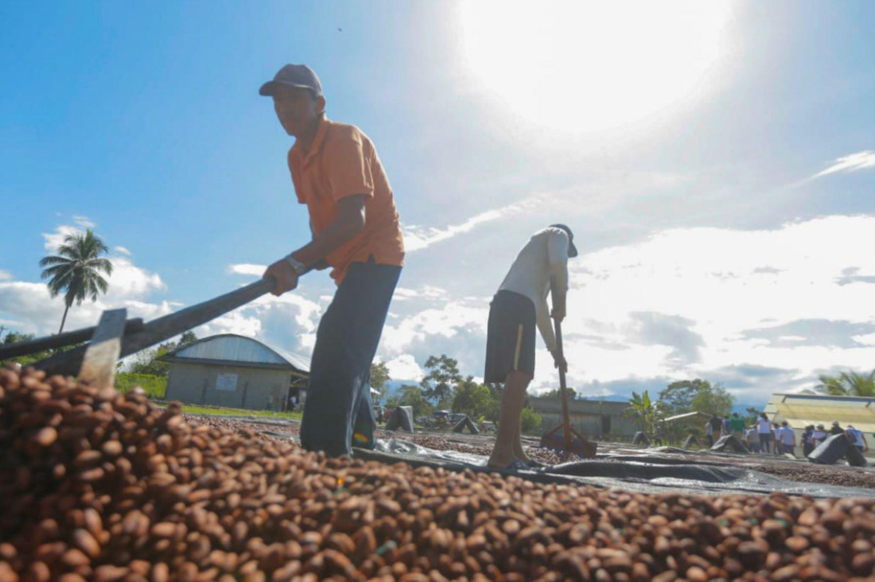 """El distrito de Pólvora (San Martín) podrá financiar tres actividades de desarrollo alternativo este año con el """"cheque del desarrollo"""" entregado por Devida."""