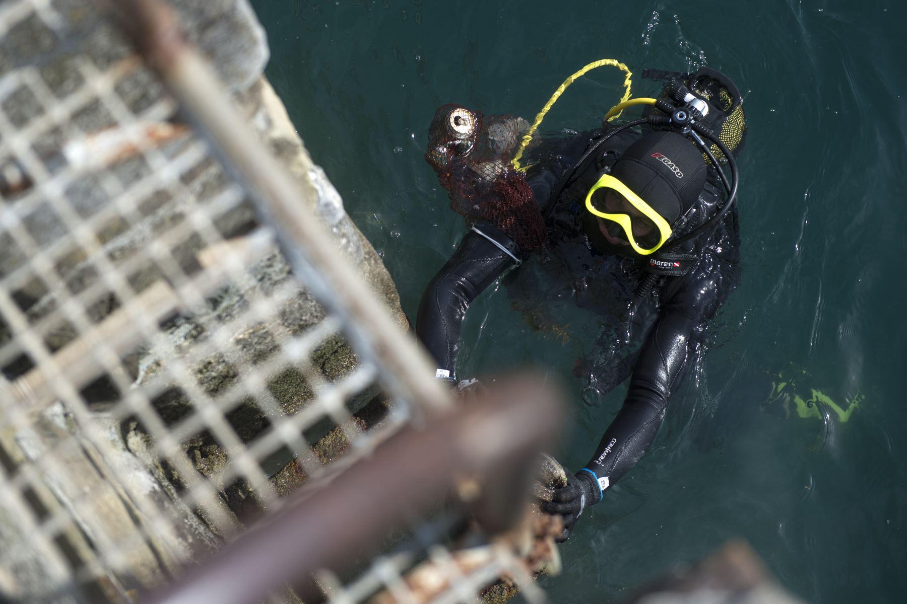 Un buceador regresa a la superficie del agua después de recoger plástico del mar en el puerto de la aldea vasca española de Bermeo como parte de una campaña de limpieza del estuario de Urdaibai para conmemorar el Día Mundial de los Océanos. Foto: AFP