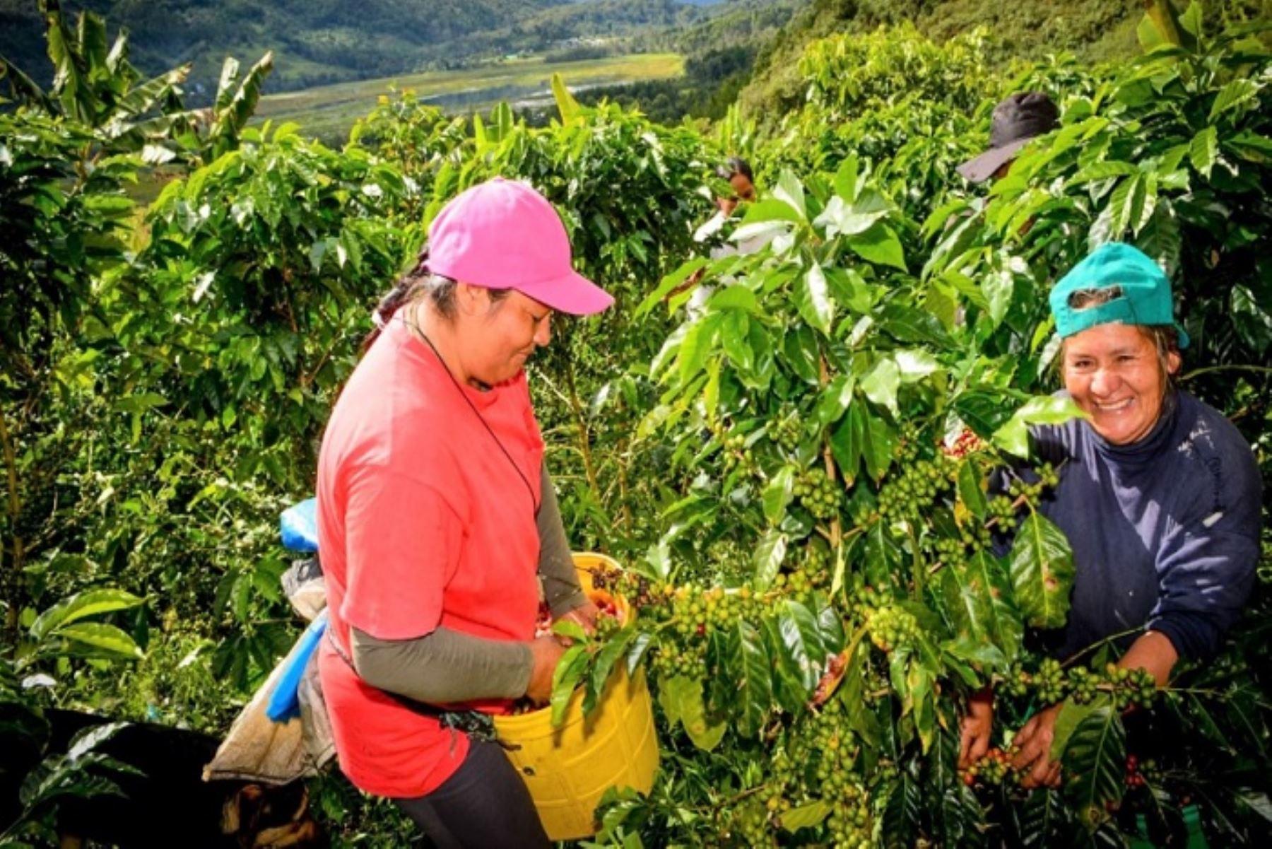 El Concurso de Emprendimientos para la Implementación de Servicios de Información Agraria que beneficiará a 100 mil pequeños y medianos productores de la región San Martín, con una inversión de 3 millones de soles, será lanzado por el Ministerio de Agricultura y Riego (Minagri) y el gobierno regional, a través de su unidad ejecutora la Dirección Regional de Agricultura.