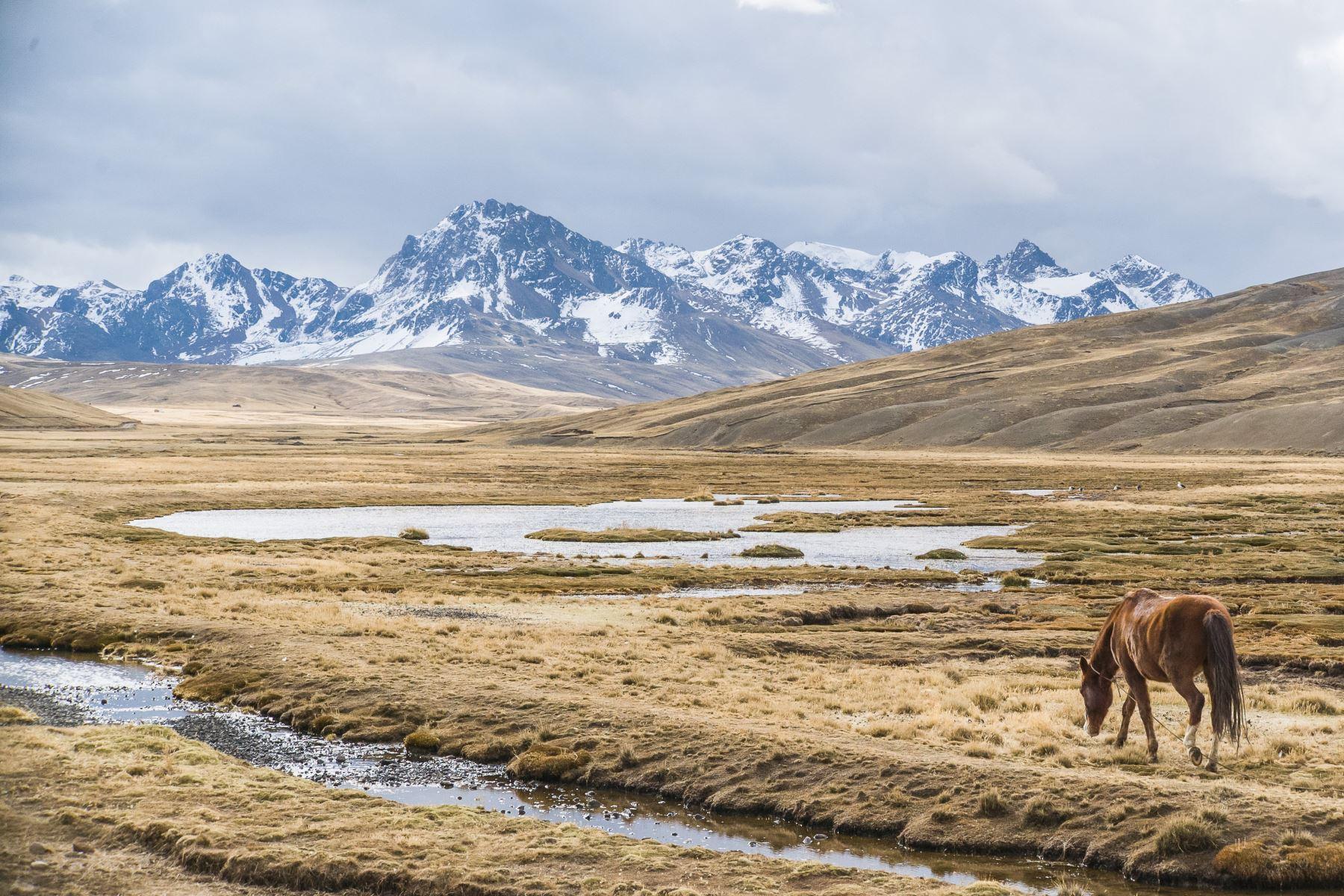 La futura Área de Conservación Regional Ausangate, en Cusco, estará conformada por siete nevados y un glaciar. Foto: ACCA
