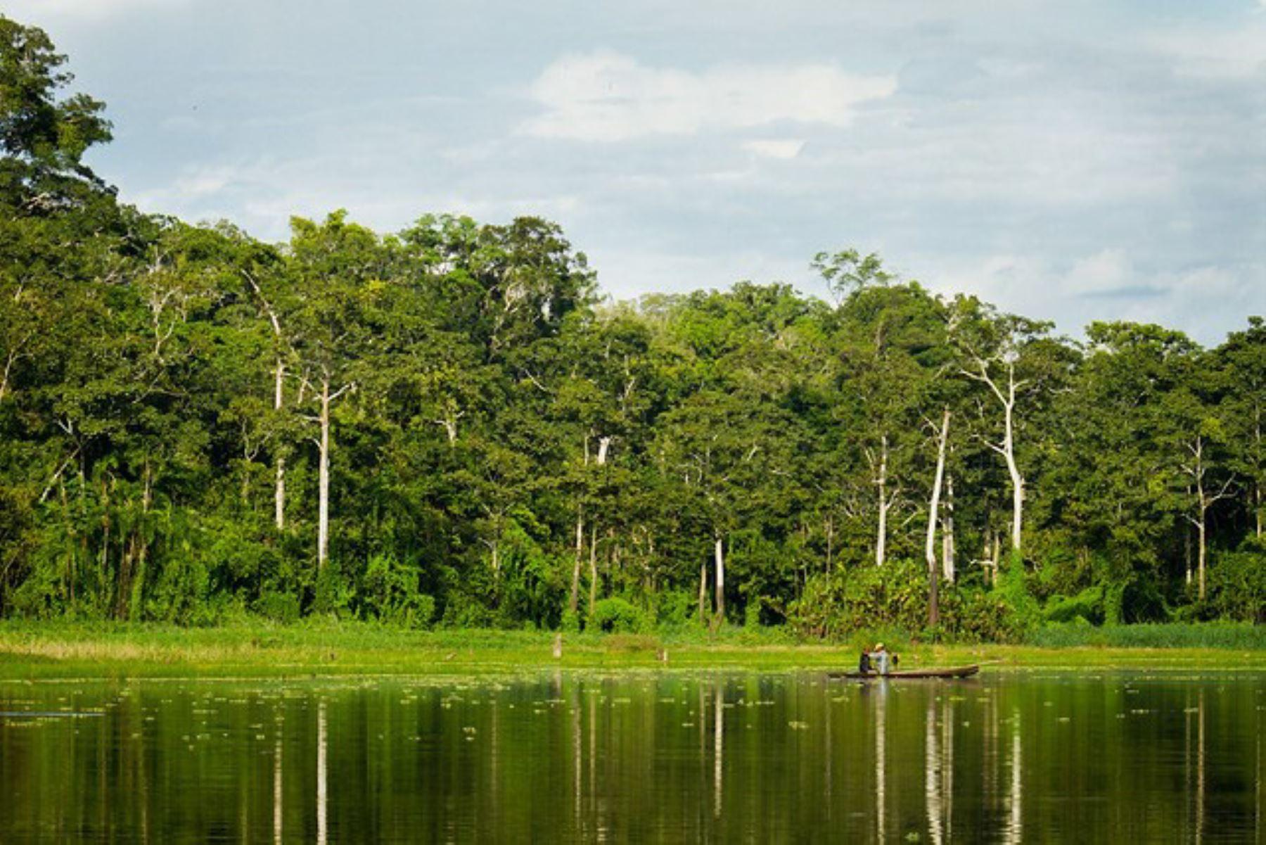 Loreto contará con sistema de información que verificará origen legal de la madera