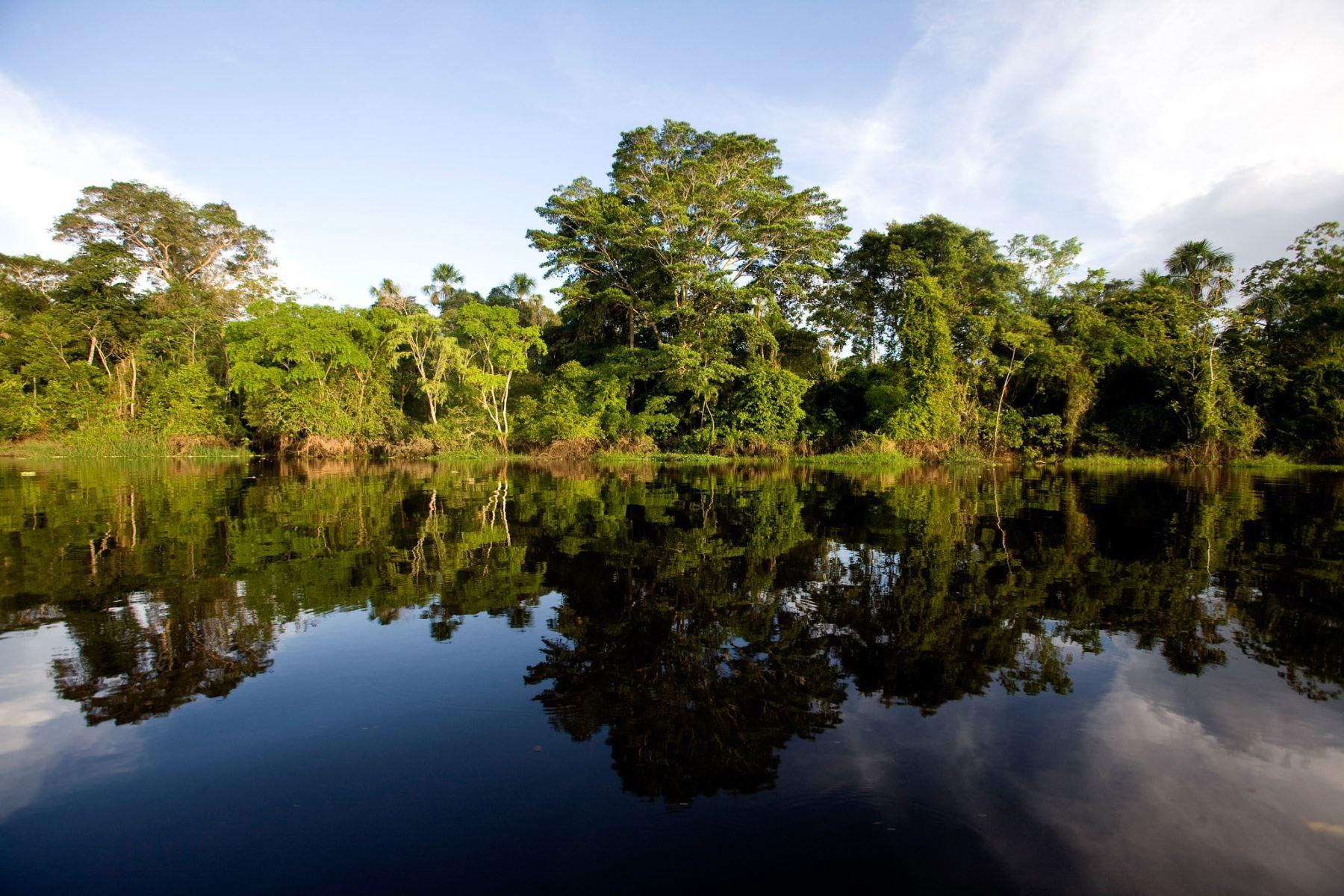 Gobierno y cooperación japonesa se unen para conservar bosques de Perú. ANDINA/Difusión