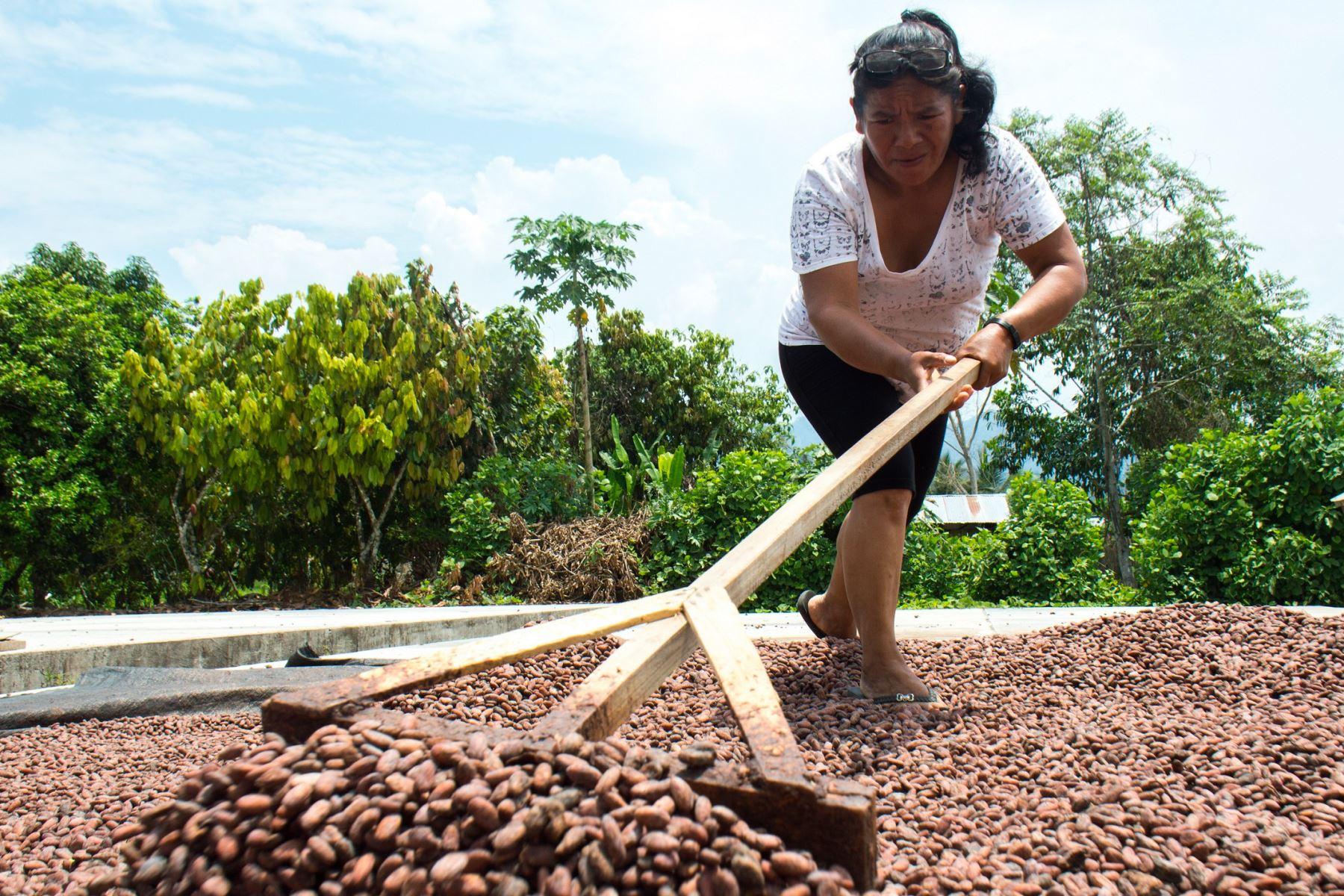 Más de 600 familias de agricultores recuperarán bosques amazónicos del Parque Nacional Cordillera Azul con agroforestería de café y cacao. ANDINA/Difusión