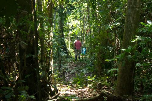 El Minam y Gobierno Regional de Madre de Dios suscribieron convenio para conservar bosques y reducir su deforestación. Foto: Cortesía