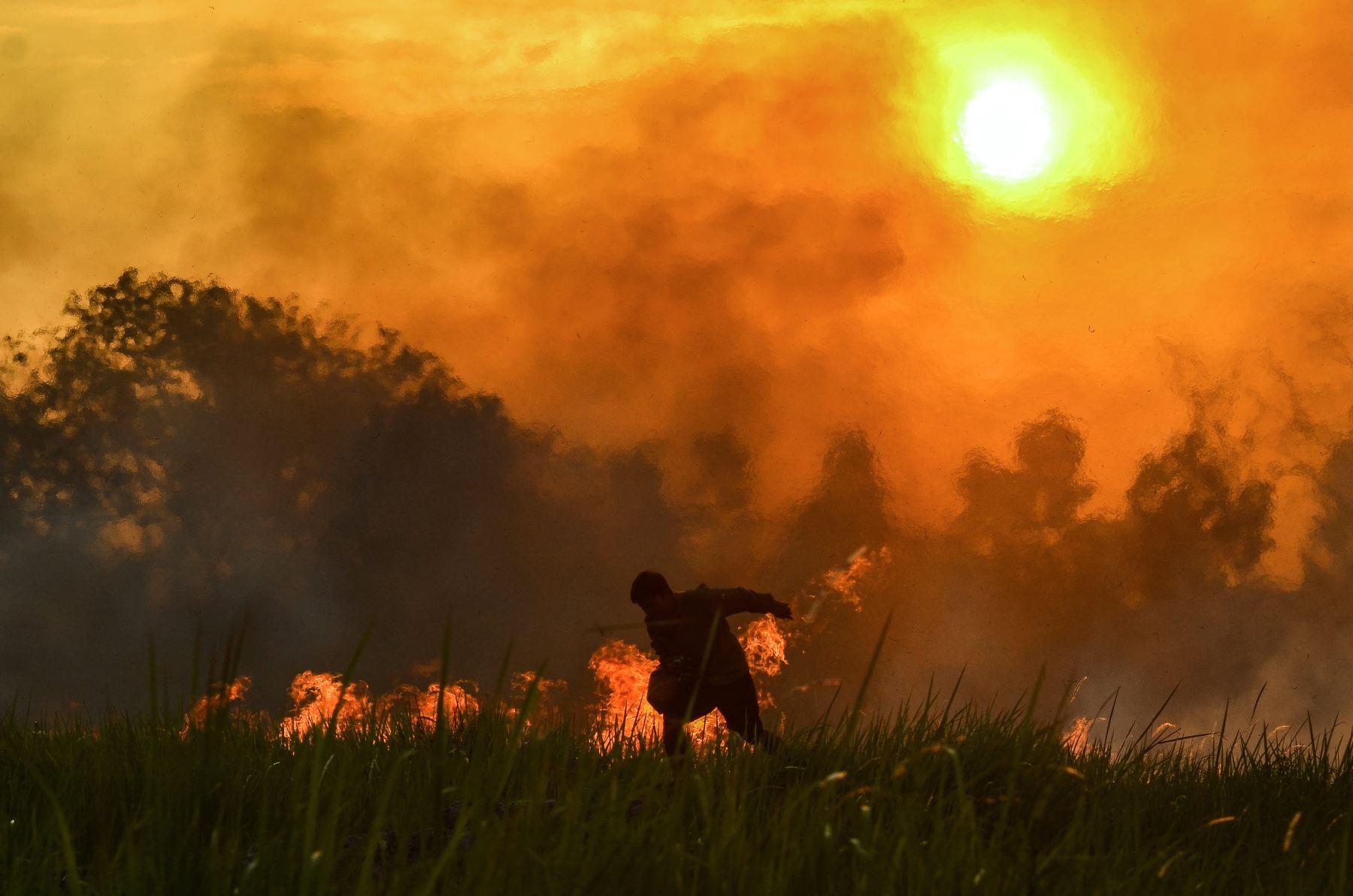 Un oficial de la Fuerza de Tareas de Incendios Forestales y Terrestres intenta apagar un incendio en una plantación de aceite de palma en Pekanbaru, en la provincia de Riau. AFP