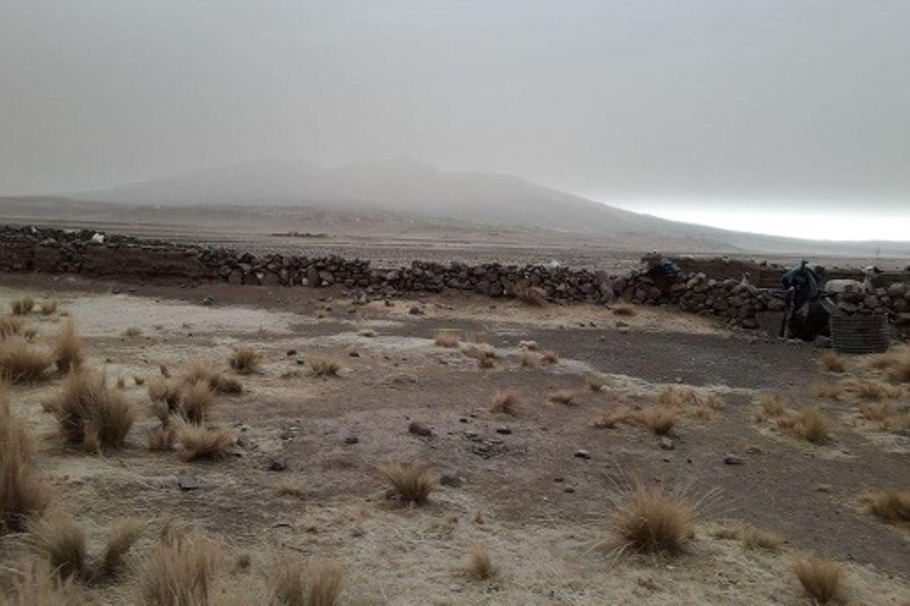 Las cenizas producto de la erupción del volcán Ubinas (Moquegua) han cubierto pastos naturales y forrajes cultivados.
