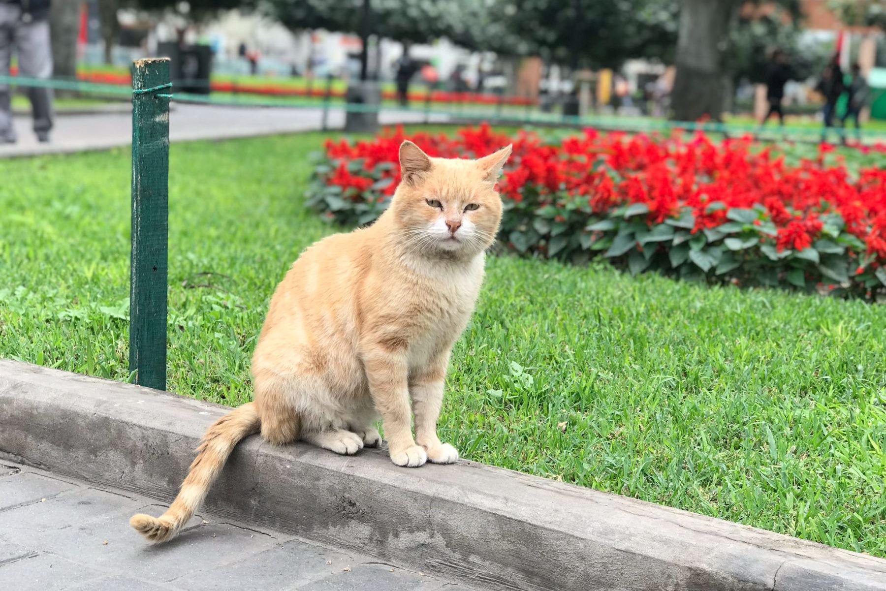 Gato del Parque Central de Miraflores. Foto: Priscila Cárdenas @ctrl_alt_suprim