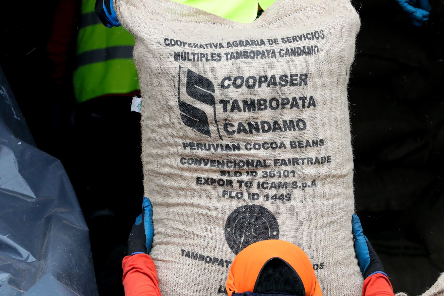 Cacao fino de aroma producido en la Reserva Nacional Tambopata y el Parque Nacional Bahuaja Sonene llegará a mesas de Italia. Foto: ANDINA/Difusión