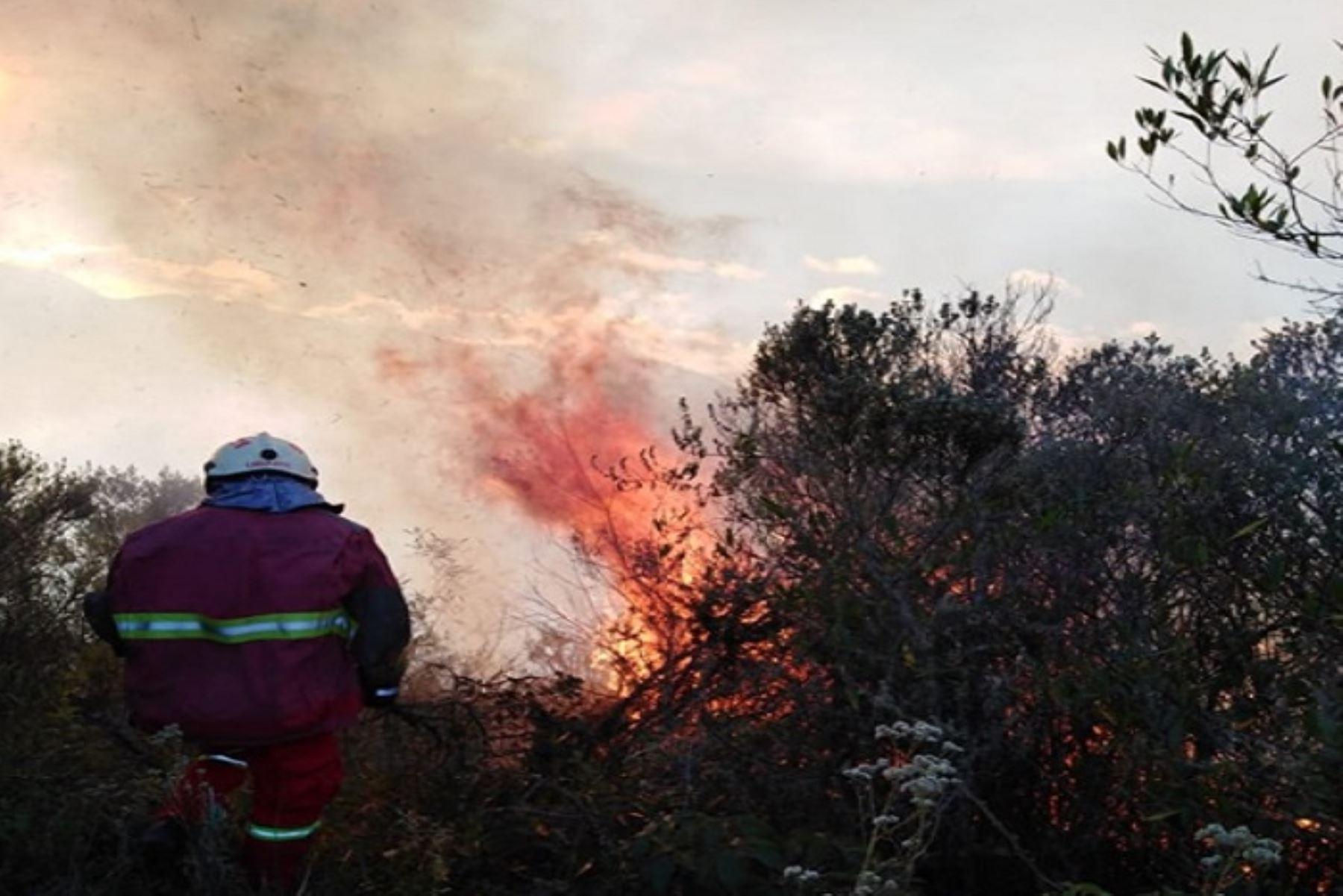 Cusco registró la mayor cantidad de incendios forestales con 24 eventos, según reporte del Indeci. Foto: ANDINA/Difusión